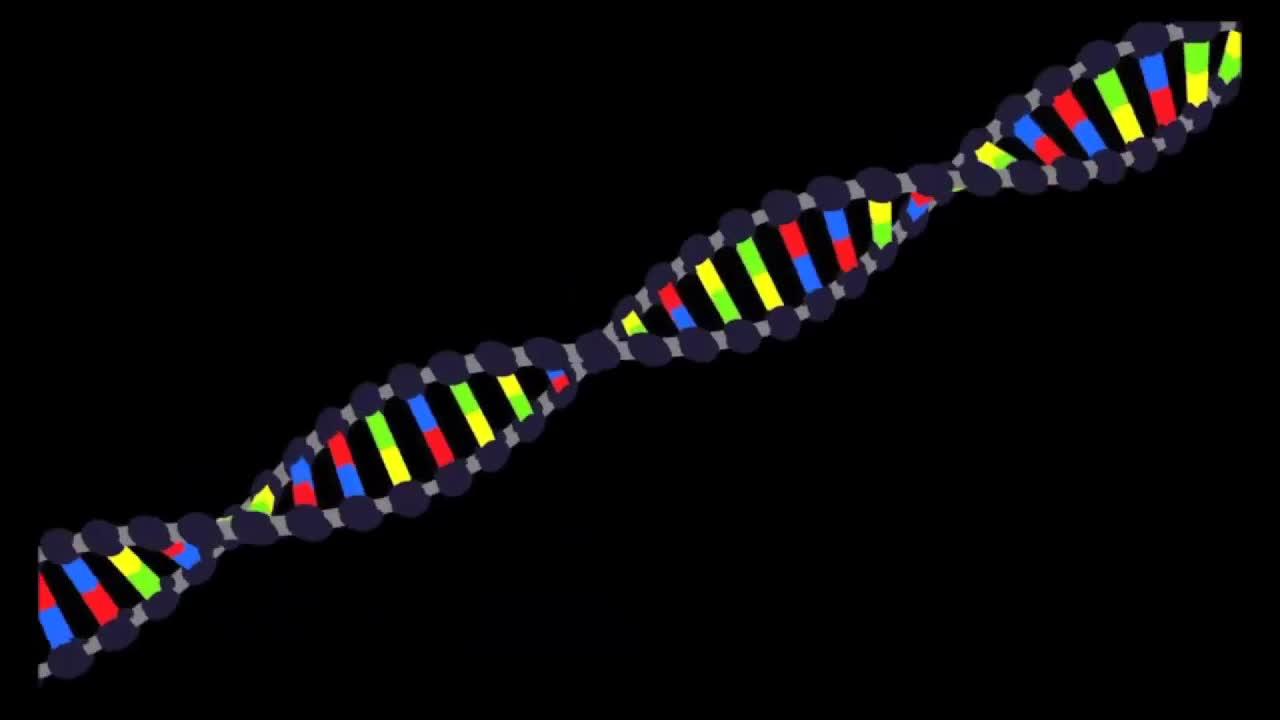 Medcast - Biochemie - Nukleinsäure (DNA und RNA) preview image