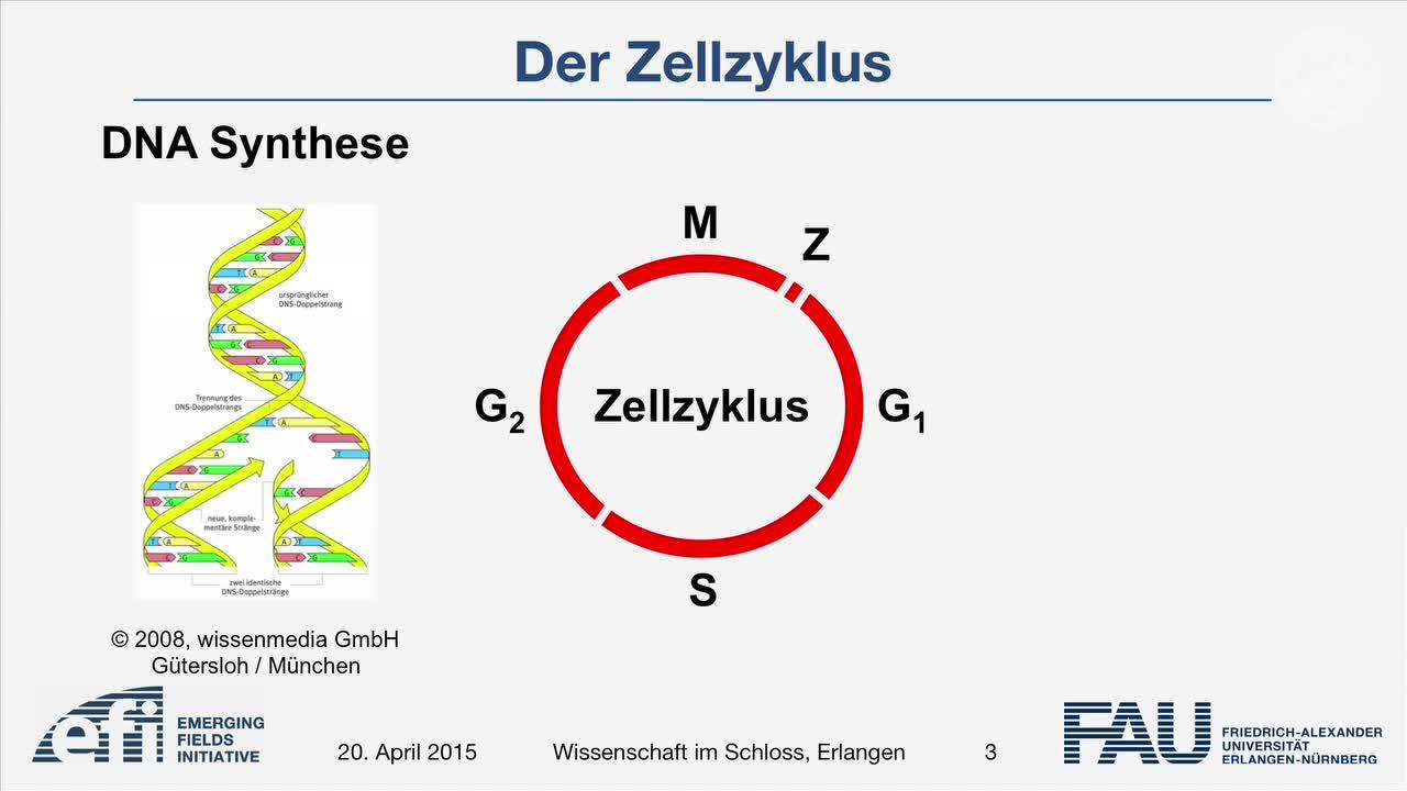 Der Zellzyklus - Kommandozentrale für chronische Krankheiten preview image