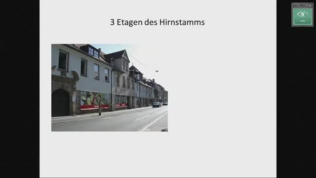 Hirnstamm (Basis, Tegmentum, Tectum); Entwicklung der Großhirnbahnen preview image