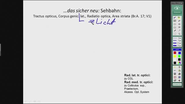 Sehrindenareale, Läsionen der Sehbahn; Ohrentwicklung preview image