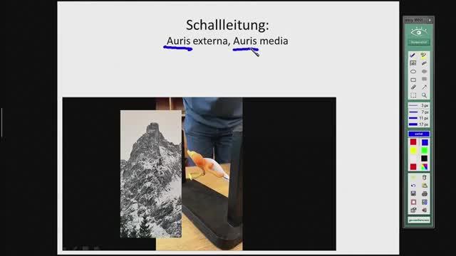 Corti-Organ, Hörbahn preview image